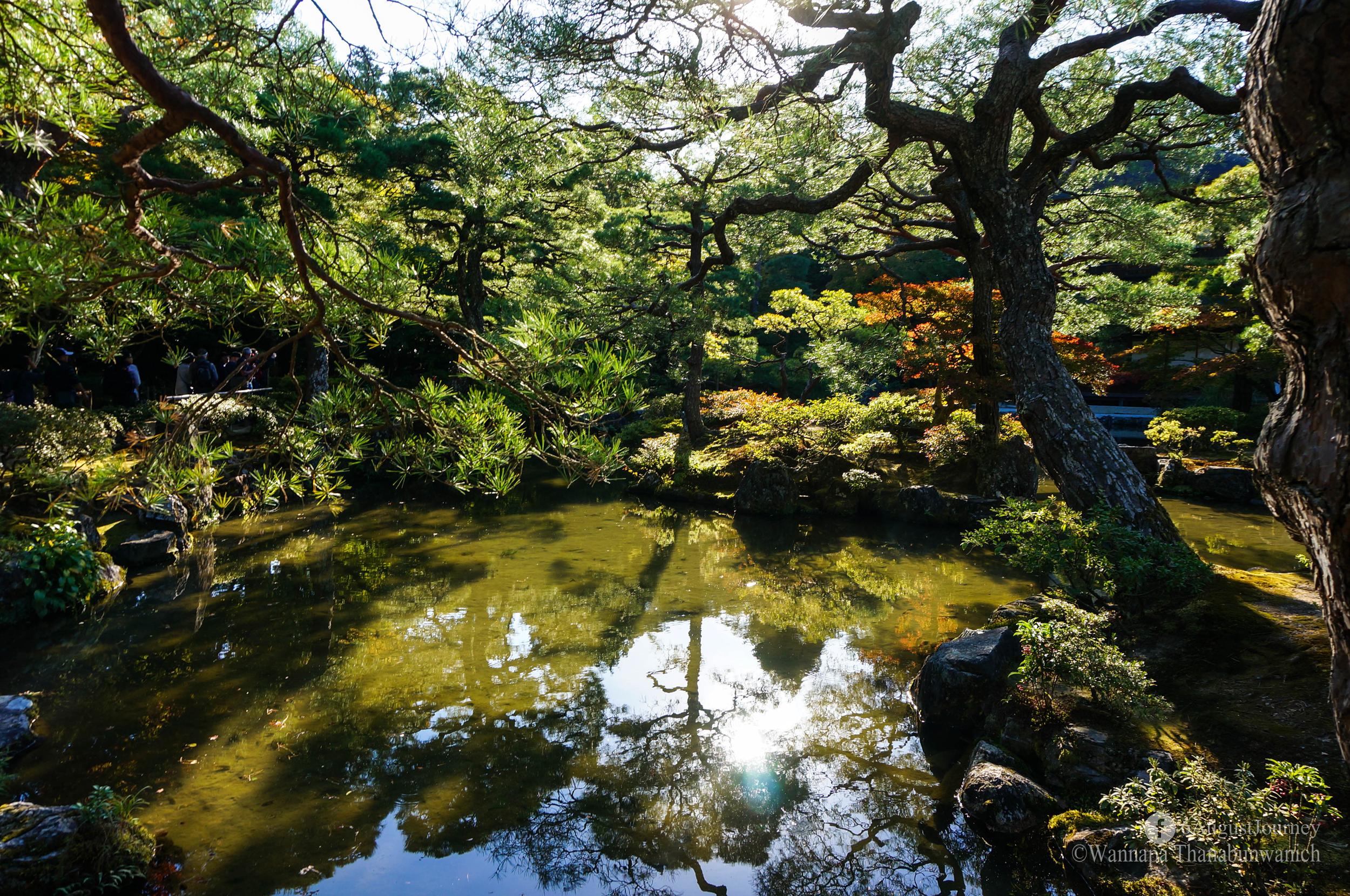 สวนสวยๆ ถ้าใบไม้เปลี่ยนสีจะสวยกว่านี้อีก