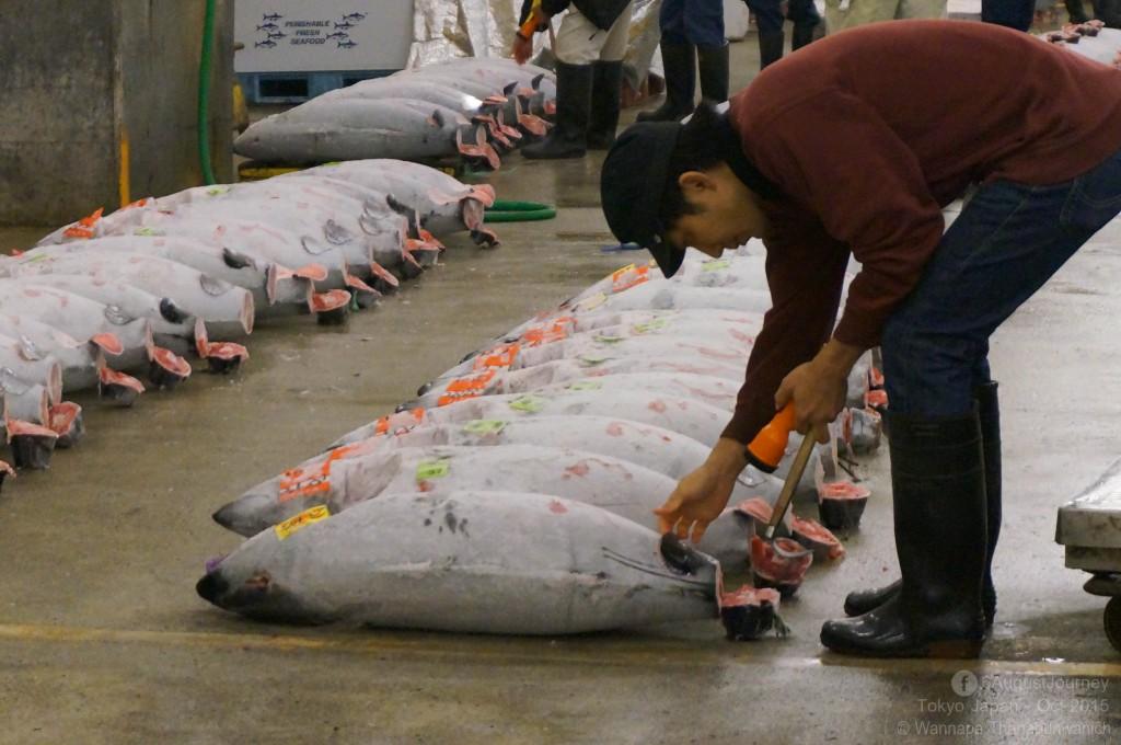 Tsukiji Fish Market (ตลาดปลาซึกิจิ)