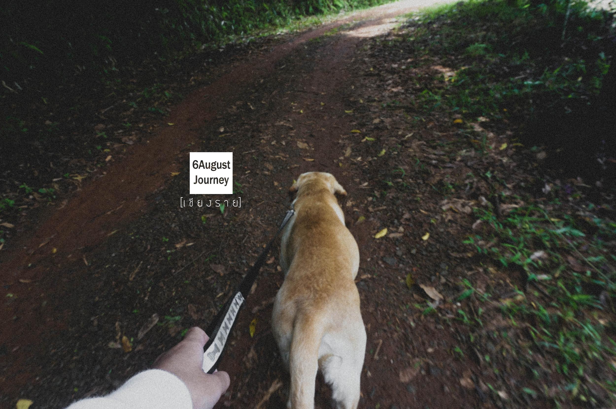 เจ้ามังกรเป็นสุนัขตลก ชอบทำหน้าตลก