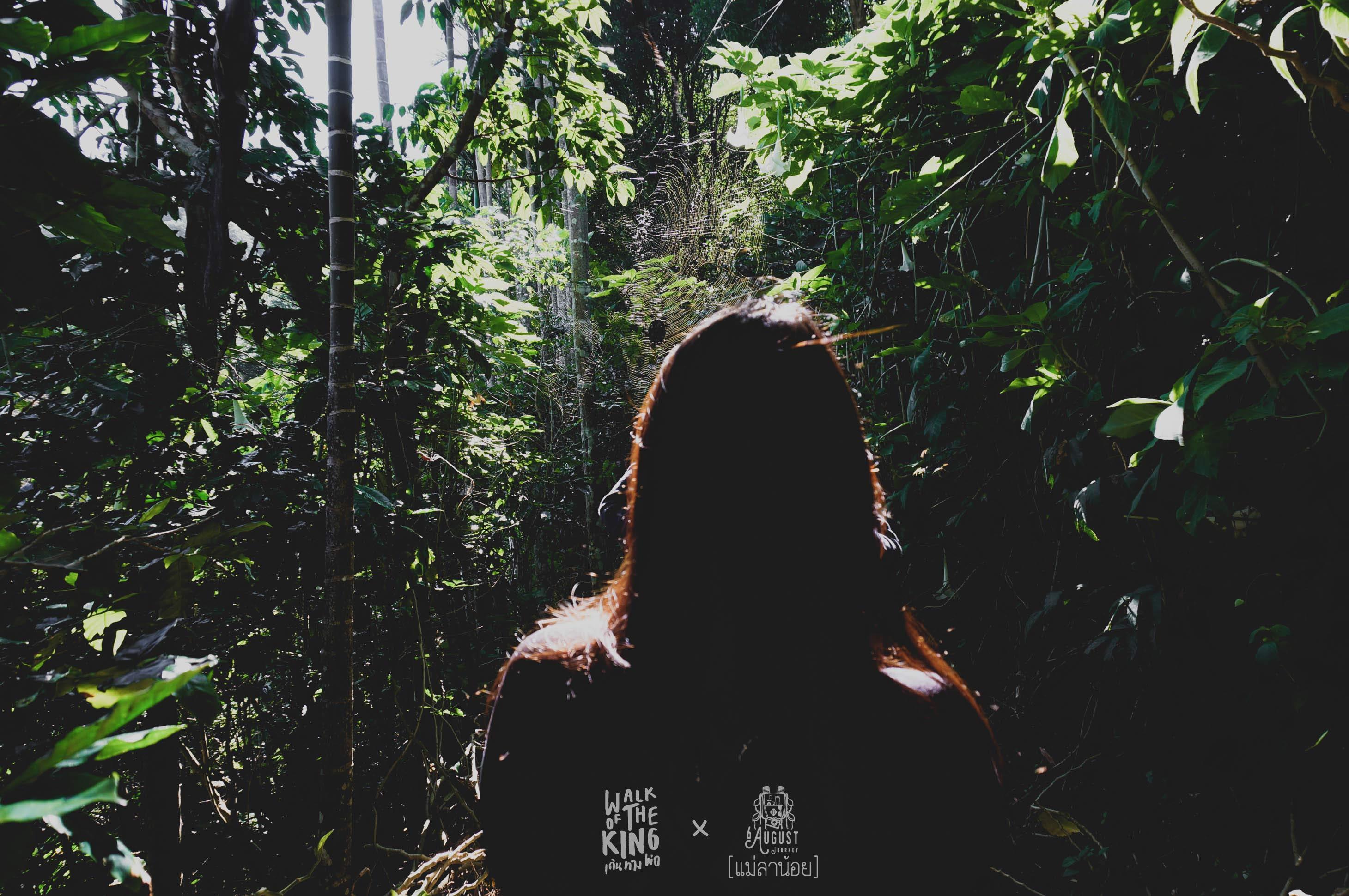 ความทึบของป่า บ่งบอกได้ถึงความเย็น และ ปกป้องแสงแดดได้ดีมาก