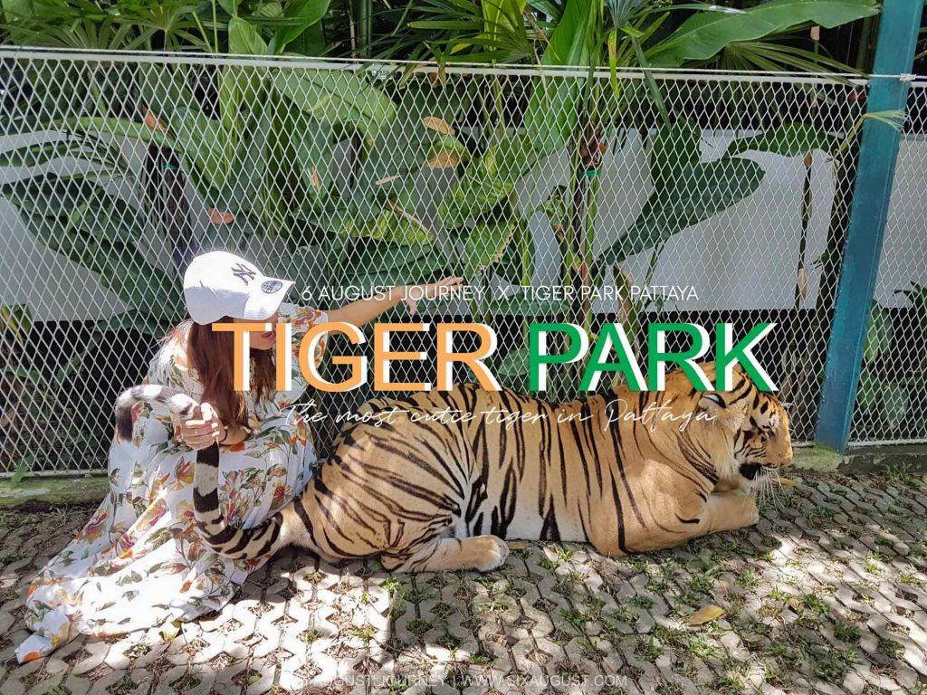Tiger Park Pattaya | เล่นกับเสือ กินบุฟเฟต์อร่อย ราคาคนไทยลด 50%